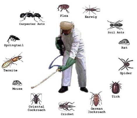 Kết quả hình ảnh cho diệt côn trùng